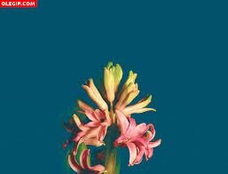 imagenes gif imagenes con movimiento flores movimiento gif find download on gifer