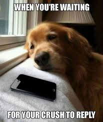 Sad Animal Memes - that sad nervous face face funny pictures and funny things