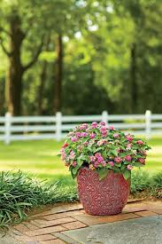 639 best southern garden images on pinterest flowers flowers
