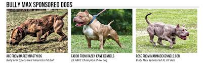 american pitbull terrier in bangalore bully max india