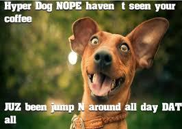Hyper Dog Meme - hyper dog meme dog best of the funny meme