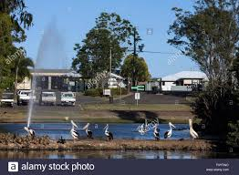Bundaberg Botanic Gardens Water Birds At Bundaberg Botanic Gardens Stock Photo 86664072 Alamy