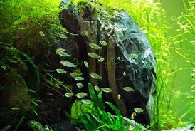Best Substrate For Aquascaping Aquarium Ornaments A Guide To Wood Rocks And Decor In The Fish Tank