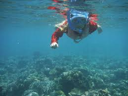 South Dakota snorkeling images Pemuteran perfect for kids family and snorkeling in bali the jpg