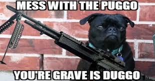 Funny Fight Memes - i can has cheezburger scrappy funny animals online cheezburger
