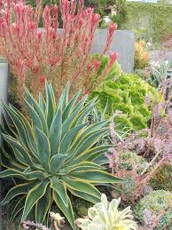 native plants of spain ca friendly design ideas roger u0027s gardens