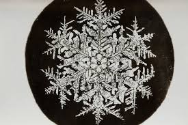 snowflake bentley book the pioneering snowflake photographs of a young obsessive new