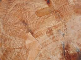wood tree rings images Dendrochronology tree rings as records of climate change jpg