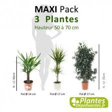 plantes d駱olluantes chambre plante d intérieur dépolluante pack maxi 3 plantes