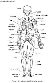 What Is Human Anatomy And Physiology 1 The 1 Human Anatomy And Physiology Course Learn About The Human