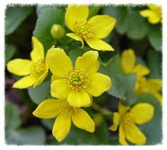 benefits of native plants importance of native plants u2014 the native plant society of