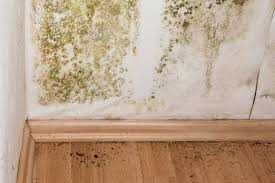 mold remediation cost eliminating mold in household houselogic