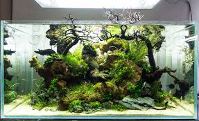 yeah aquascaping
