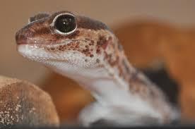 anyone have reptiles amphibians show u0027em off page 2 backyard