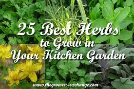 Kitchen Herb Garden Design 25 Best Herbs To Grow In Your Kitchen Garden The Herb Exchange