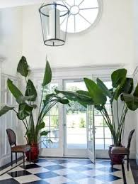 Indoor Decorative Trees For The Home Best Indoor Palm Trees Indoor Plants Suitable For Beginners