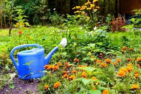 garden design garden design with when to water plants the best