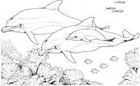 impressive dolphins coloring pages nice kids c 5673 unknown