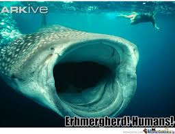 Whale Meme - enthusiastic whale by hostilehotty meme center