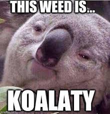 High Koala Meme - stoned koala imgflip