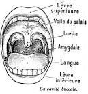 dessins scolaires anatomie homme - Dessins scolaires anatomie ...