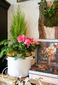 Azalea Topiary Oliver And Rust I Bought A Million Green Trees At Christmas And