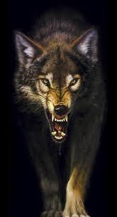 wolves together snarling wolf wolves 15975099 318 587