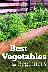 Gardening For Beginners Vegetables by Best Vegetables For Beginner Gardeners Five Spot Green Living