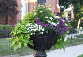 Summer Container Garden Ideas Mid Atlantic Gardening Colorful Container Gardens Of Frostburg