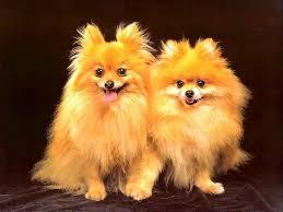 cute puppies and dogs wallpaper wallpapersafari