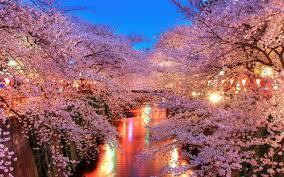 macon u0027s cherry blossom festival needs more japanese influence