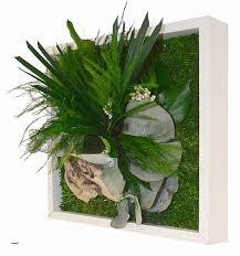 plante bureau bureau plantes de bureau sans soleil white bird of paradise