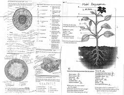 leaf anatomy worksheet key image collections learn human anatomy