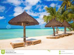 Beach Sun Umbrella Sun Umbrellas And Beach Beds Under The Palm Trees On Tropical