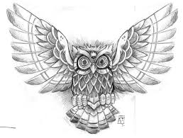 Patterned Flying Owl Drawing Illustration Flying Owl Drawing B Flying Owl B Possibilities