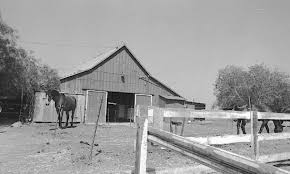 Red Barn Santa Ynez Rolling Hills Estates And The Red Barn South Bay History