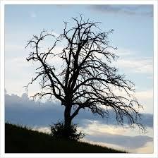 tim burton tree by domcyrus on deviantart