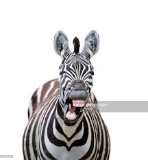 animal stock photos and pictures getty images