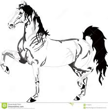 mustang horse drawing beautiful horse drawing black and white stock vector image