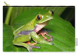 blue sided tree frog carry all pouch for sale by bg thomson