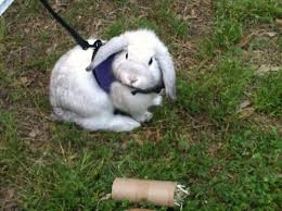 Emma Freud Rabbit Hutch 18 Best Dumb Images On Pinterest Funny Stuff Random Things And