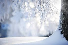 free snow tree images pictures and royalty free stock photos