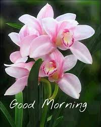 good morning flowers for you u2013 lol baba