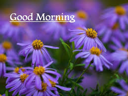 Flower Alt Code - good morning wishes with flowers pictures images page 4