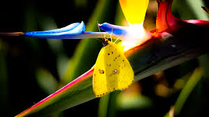 colors close to yellow free images nature bird sunlight leaf flower bloom pollen
