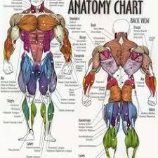 Human Anatomy And Physiology Marieb 7th Edition Devry University Essentials Of Human Anatomy U0026 Physiology