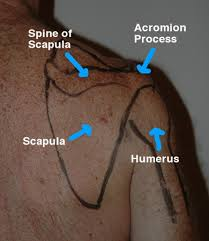 How To Palpate Subscapularis Self Muscle Massage Pt 13 Posterior Shoulder Athletes Treating