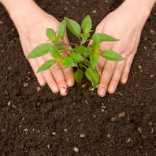 12 ways mushroom compost will improve your soil
