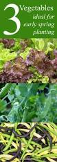 Lettuce Container Garden Best 25 Planting Lettuce Ideas On Pinterest How To Plant