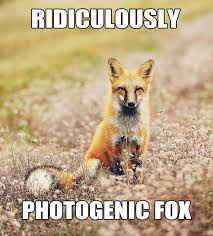 What Did The Fox Say Meme - nature conservancy on twitter what does fox say http t co